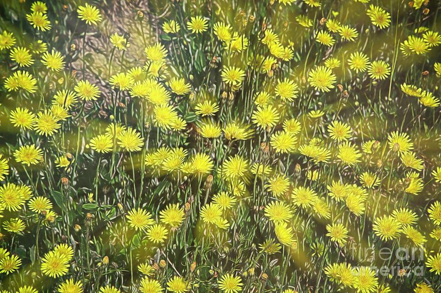Yellow Meadow Digital Art