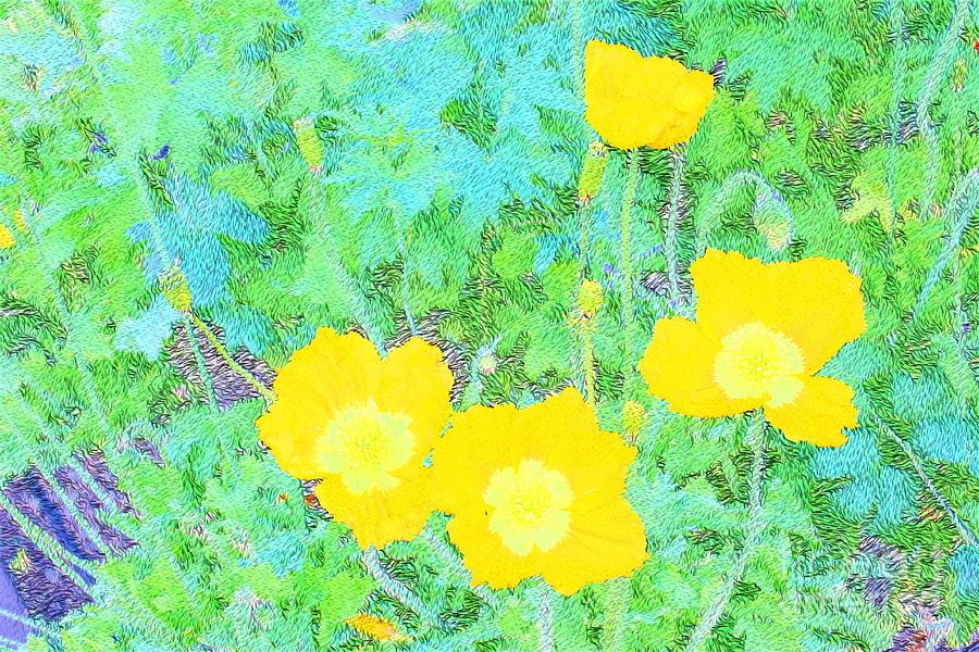Yellow Poppies Photograph