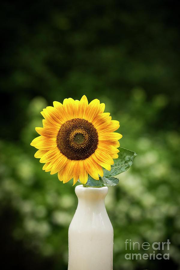 Yellow Sunflower In Vase Photograph
