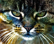 Cat Art Print by Frank Tschakert