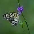 Butterfly On Flower  by Sandy Keeton