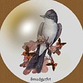 Eastern Kingbird by Madeline  Allen - SmudgeArt