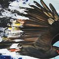 Everglades Snail Kite by Anthony Burks Sr