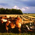 Amish Hay Rig