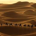 Camel Caravan In The Erg Chebbi Southern Morocco by Ralph A  Ledergerber-Photography