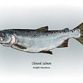 Chinook Salmon by Ralph Martens