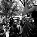 Debate With Lama by Lian Wang