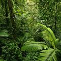 Dense Tropical Rain Forest by Matt Tilghman