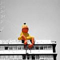 Duck View by Stav Stavit Zagron