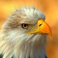 Eagle 10 by Marty Koch