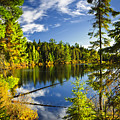 Forest And Sky Reflecting In Lake by Elena Elisseeva