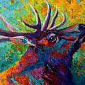 Forest Echo - Bull Elk by Marion Rose