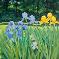 Irises In The Garden by Betty McGlamery