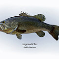 Largemouth Bass by Ralph Martens