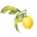 Lemon by Fran Henig