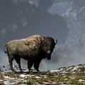 Lonely Bison by Daniel Eskridge