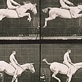 Man And Horse Jumping A Fence by Eadweard Muybridge