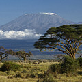 Mount Kilimanjaro by Michele Burgess