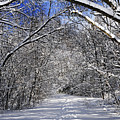 Path In Winter Forest by Elena Elisseeva
