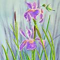 Purple Dutch Iris And Hummer by Kathryn Duncan