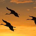 Sandhill Cranes At Dusk by Larry Linton