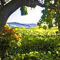 Shady Vineyard by Patricia Stalter