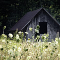 Summer Barn Print by Rob Travis