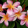 Wailua Sweet Love by Sharon Mau