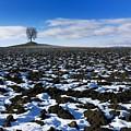 Winter Tree. by Bernard Jaubert