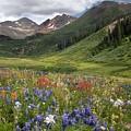Alpine Flowers In Rustler's Gulch, Usa by Bob Gibbons