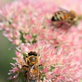 2 Bees by Angela Rath