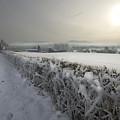 Frozen Britain by Angel  Tarantella