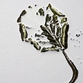 Leaf by Bernard Jaubert