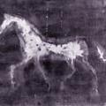 Horse by Julie Niemela