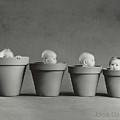 4 Pots by Anne Geddes