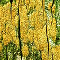 Tree Bark by John Foxx