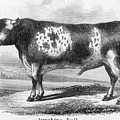 Cattle, 19th Century by Granger