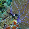 A Bi-color Damselfish Amongst The Coral by Terry Moore