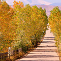 A Colorful Country Road Rocky Mountain Autumn View  by James BO  Insogna