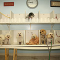 A Day At The Doggie Day Spa by Michael Ledray
