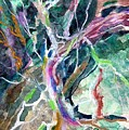 A Dying Tree by Mindy Newman