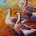 A Gaggle Of Four - Geese by Marion Rose