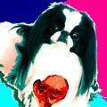 A Japanese Chin And His Toy by Kathleen Sepulveda