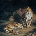 A Pair Of Leopards by William Huggins