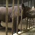 A Rhino At The Sedgwick County Zoo by Joel Sartore
