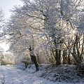 A Sparkling Winter Day by Sophie De Roumanie