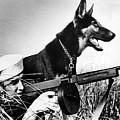A Trained German Shepherd Sitting Watch by Everett