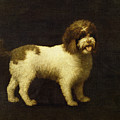 A Water Spaniel by George Stubbs