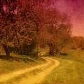 A Winding Road - Bayonet Farm by Angie Tirado