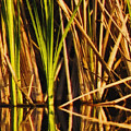 Abstract Reeds Triptych Top by Steven Sparks
